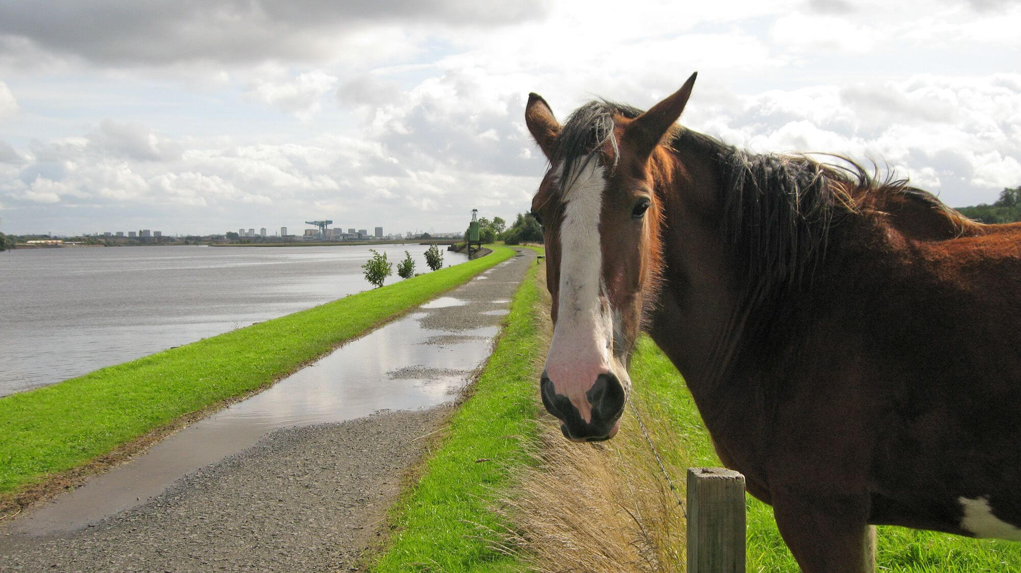 horse by the clyde